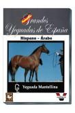 Grandes Yeguadas de España. Mantellina