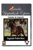 Grandes Yeguadas de España. Pedro Beca