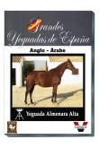 Grandes Yeguadas de España. Almenara Alta